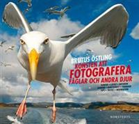 konsten-att-fotografera-faglar-och-andra-djur